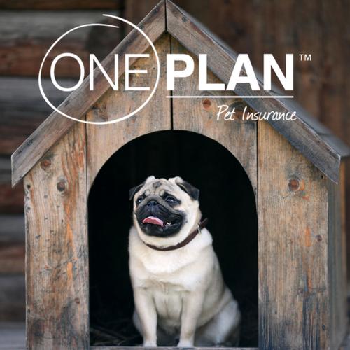 Oneplan Pet Insurance – PetAdvisor